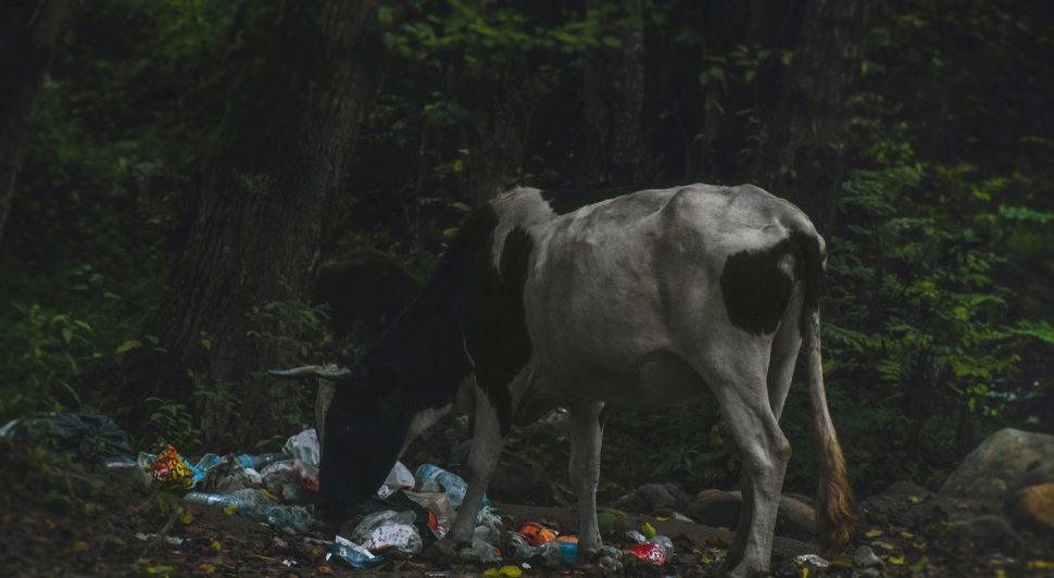 how-recycling-protects-humans-and-animals